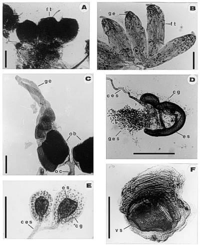 Metodologías: Técnicas básicas de anatomía microscópica y de ...